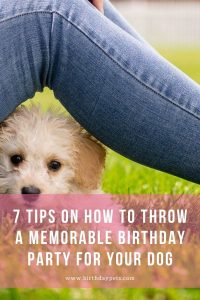 7 Tips on How to Throw A Memorable Birthday Party for Your Dog