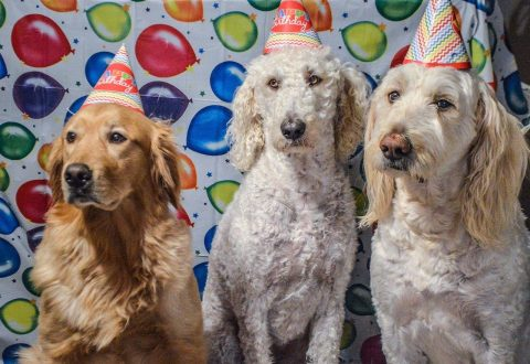 Birthday Party For My Dog?