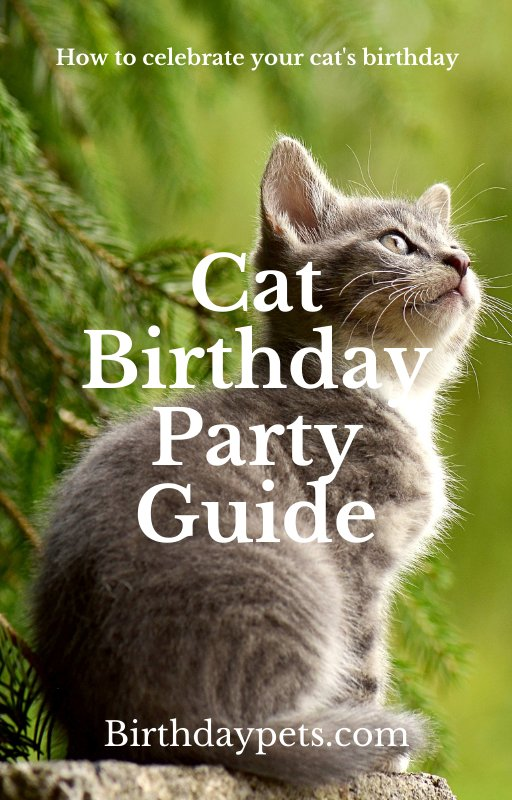 Cat Birthday Party Guide